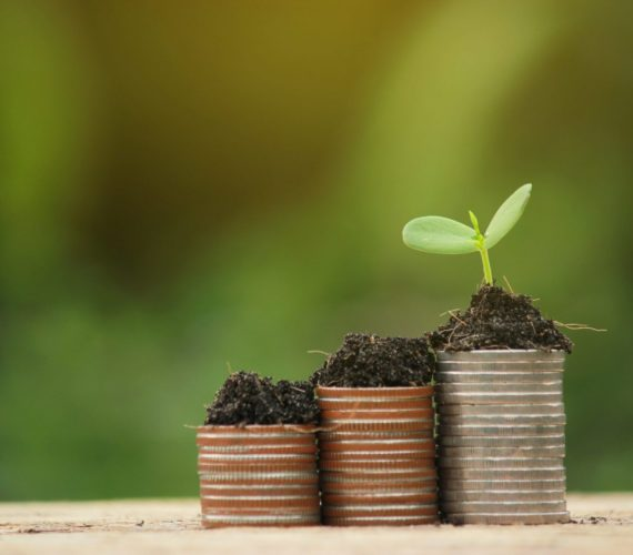 coin and green growing plant on old wood tree bokeh background.concept save money